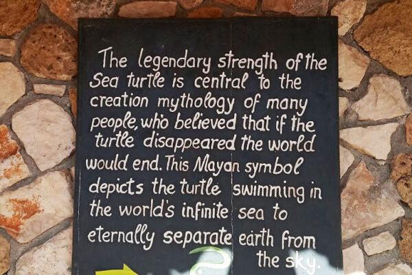 Visit Zakynthos Turtle Rescue Center