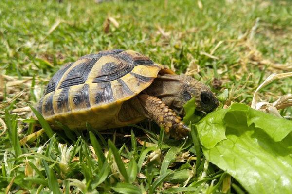 Zakynthos sea turtles